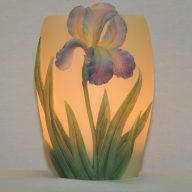 bearded iris memory lamp
